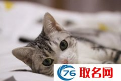 猫咪最火逗比名字